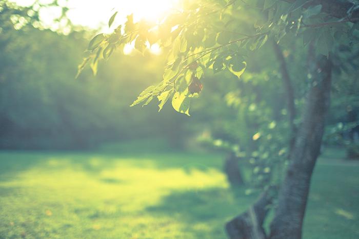 生い茂る木々